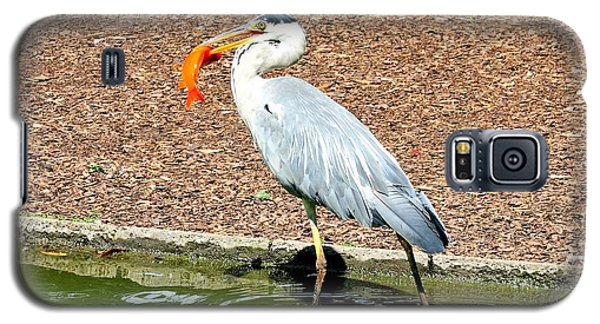 Galaxy S5 Case featuring the photograph Blue Heron Feeding by Joe  Ng