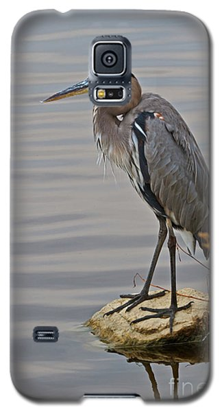 Blue Heron IIi Galaxy S5 Case