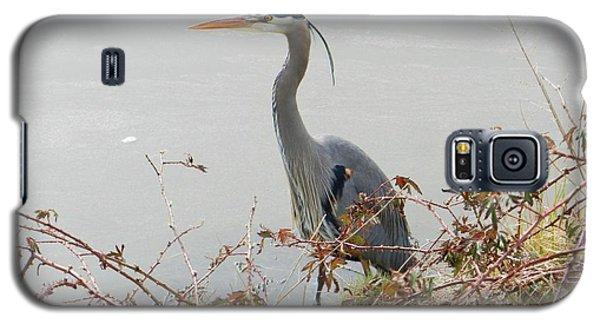 Galaxy S5 Case featuring the photograph Blue Heron In Padilla Bay by Karen Molenaar Terrell