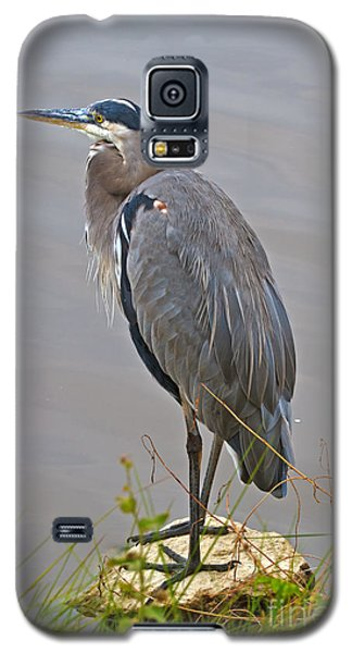 Blue Heron Iv Galaxy S5 Case