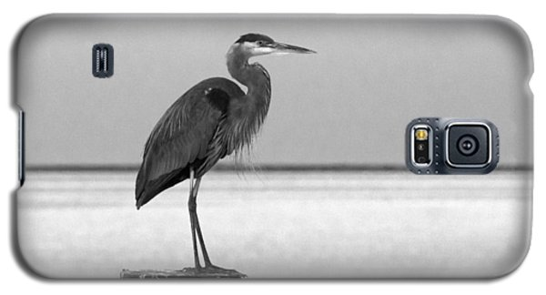 Blue Heron On Post Galaxy S5 Case