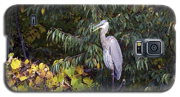 Blue Heron Perched In Tree Galaxy S5 Case