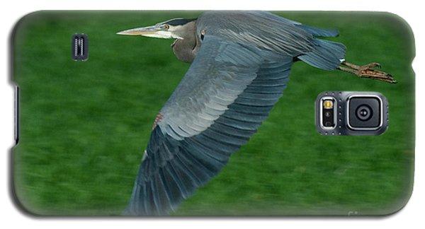 Blue Heron Galaxy S5 Case by Rod Wiens