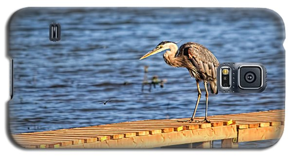 Blue Heron Spies The Dragonfly Galaxy S5 Case