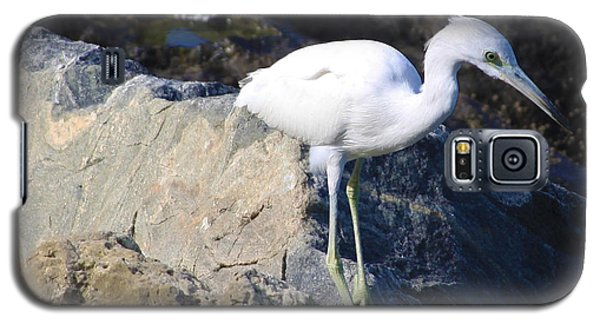 Galaxy S5 Case featuring the photograph Blue Heron Squared by Chris Thomas