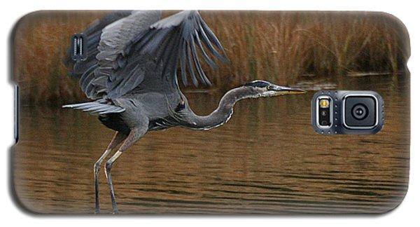 Blue Heron Takes Flight Galaxy S5 Case