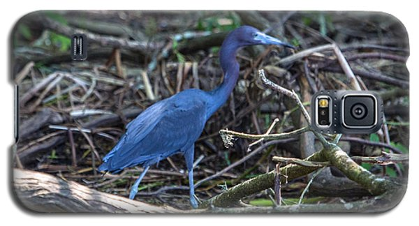 Little Blue Heron On The Banks Of An Atchafalya Bayou Galaxy S5 Case