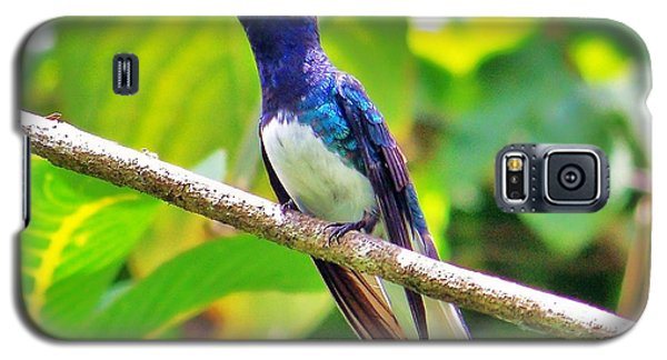 Galaxy S5 Case featuring the photograph Blue Humming Bird by Al Fritz