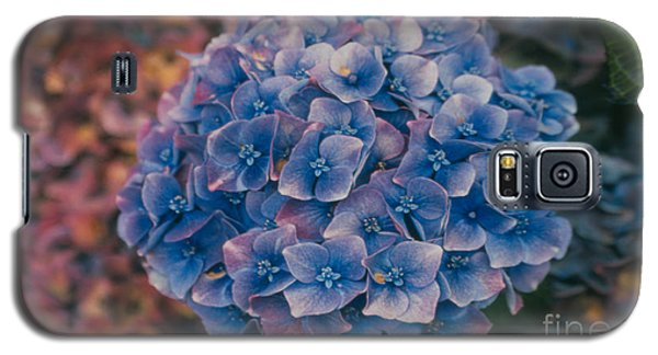 Blue Hydrangea Galaxy S5 Case by Heather Kirk