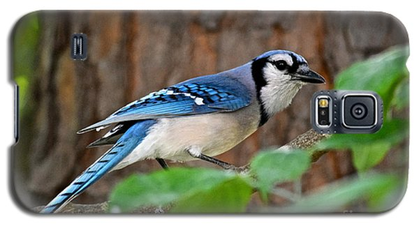 Blue Jay Beauty Galaxy S5 Case