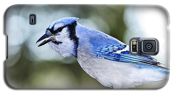 Bluejay Galaxy S5 Case - Blue Jay Bird by Elena Elisseeva
