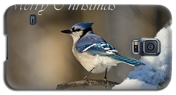 Blue Jay Christmas Card 2 Galaxy S5 Case
