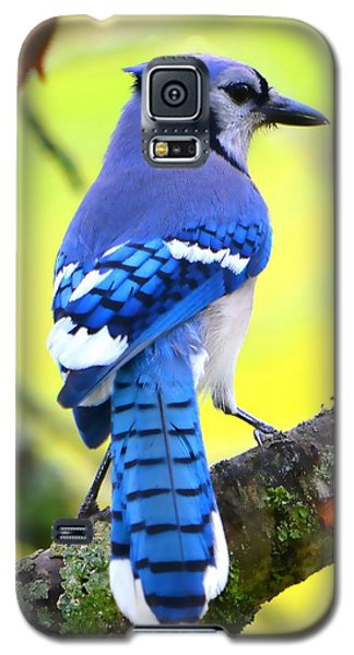 Galaxy S5 Case featuring the photograph Blue Jay by Deena Stoddard