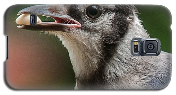 Blue Jay Formal Portrait Galaxy S5 Case by Jim Moore