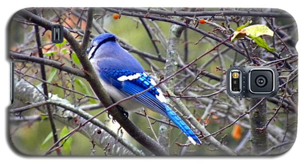 Blue Jay In A Cold Morning  Galaxy S5 Case by Edwin Alverio