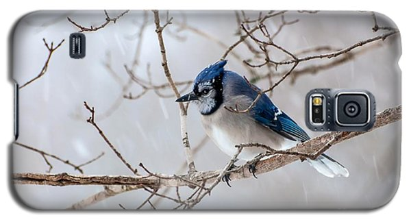 Blue Jay In Blowing Snow Galaxy S5 Case