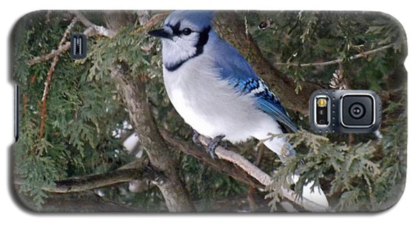 Galaxy S5 Case featuring the photograph Blue Jay In The Cedars by Brenda Brown