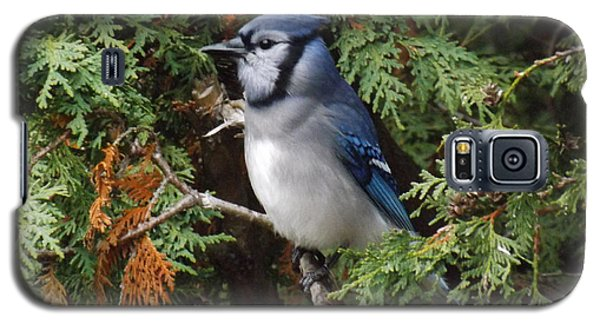 Galaxy S5 Case featuring the photograph Blue Jay In Cedar Tree 2 by Brenda Brown