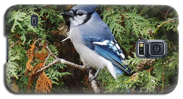 Galaxy S5 Case featuring the photograph Blue Jay In Cedar Tree by Brenda Brown