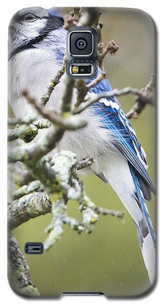 Blue Jay In The Rain Galaxy S5 Case