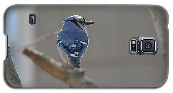 Blue Jay Galaxy S5 Case by James Petersen