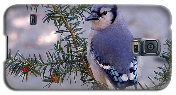 Galaxy S5 Case featuring the photograph Blue Jay - Morning Visitor  by Susan  Dimitrakopoulos