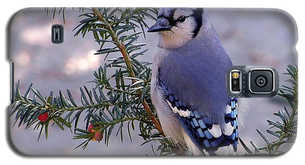 Blue Jay - Morning Visitor  Galaxy S5 Case