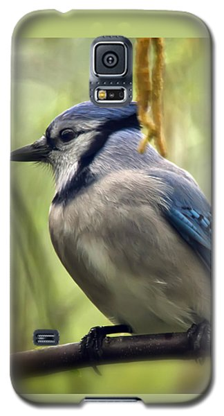 Blue Jay On A Misty Spring Day - Square Format Galaxy S5 Case by Lois Bryan
