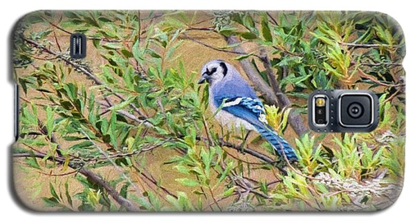 Blue Jay On Southern Wax Myrtle Galaxy S5 Case