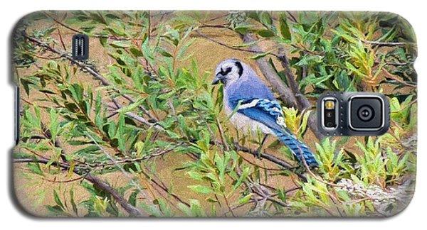 Blue Jay On Southern Wax Myrtle Galaxy S5 Case