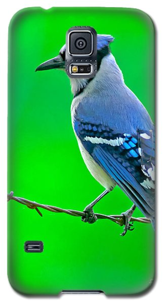 Blue Jay On The Fence Galaxy S5 Case