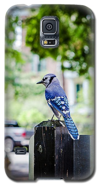 Galaxy S5 Case featuring the photograph Blue Jay by Sennie Pierson