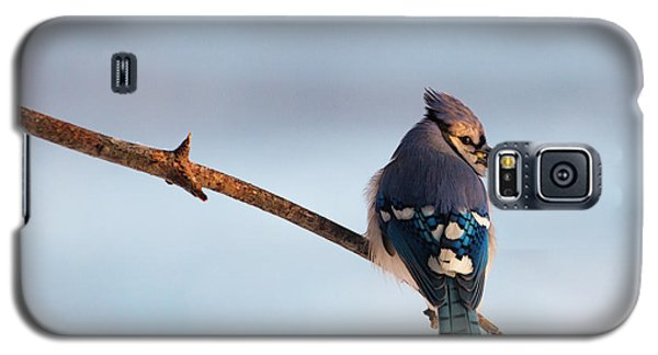 Blue Jay With Nuts Galaxy S5 Case by Everet Regal