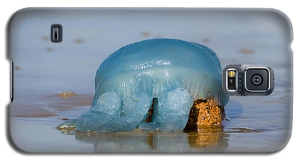 Galaxy S5 Case featuring the photograph Blue Jellyfish 01 by Kevin Chippindall
