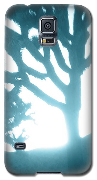 Blue Joshua Trees In Pinhole Galaxy S5 Case by Carolina Liechtenstein