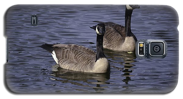 Blue Lake Geese Galaxy S5 Case
