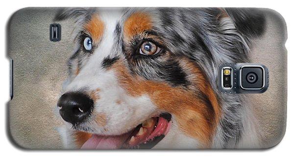 Blue Merle Australian Shepherd Galaxy S5 Case