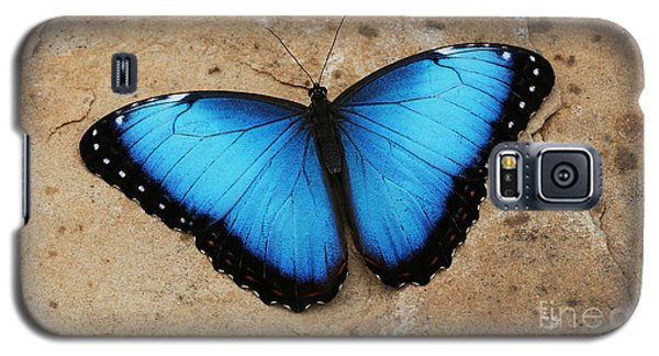Blue Morpho #2 Galaxy S5 Case by Judy Whitton