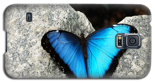 Blue Morpho Butterfly Galaxy S5 Case