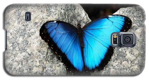 Blue Morpho Butterfly Galaxy S5 Case