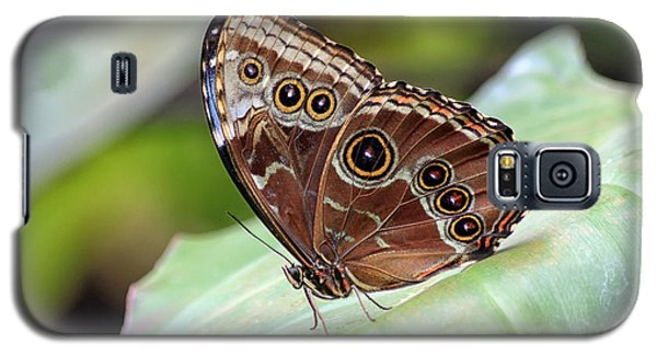 Galaxy S5 Case featuring the photograph Blue Morpho Butterfly by Teresa Zieba
