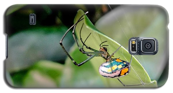 Galaxy S5 Case featuring the photograph Blue Orbweaver by TK Goforth
