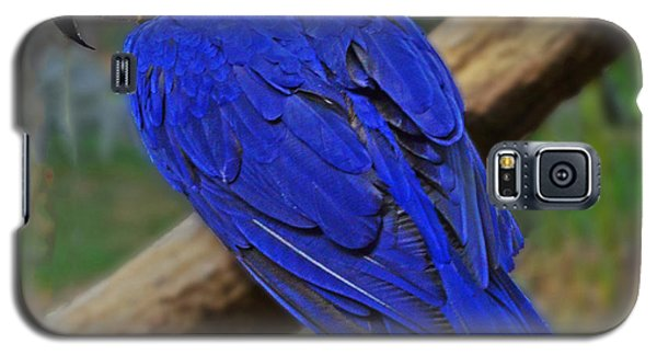 Galaxy S5 Case featuring the photograph Blue Parrot by Jack Moskovita