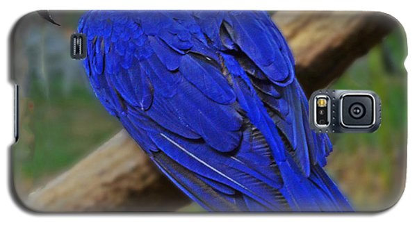 Blue Parrot Galaxy S5 Case