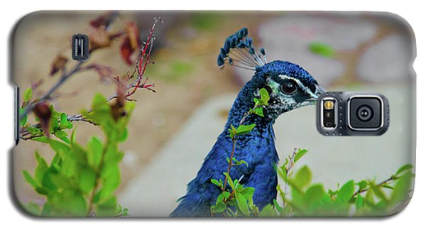 Galaxy S5 Case featuring the photograph Blue Peacock Green Plants by Jonah  Anderson