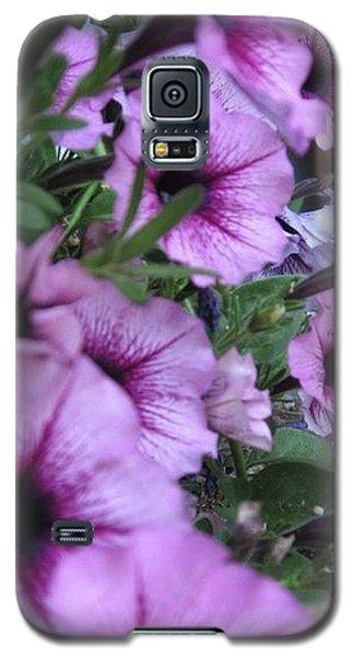 Blue Petunias Galaxy S5 Case