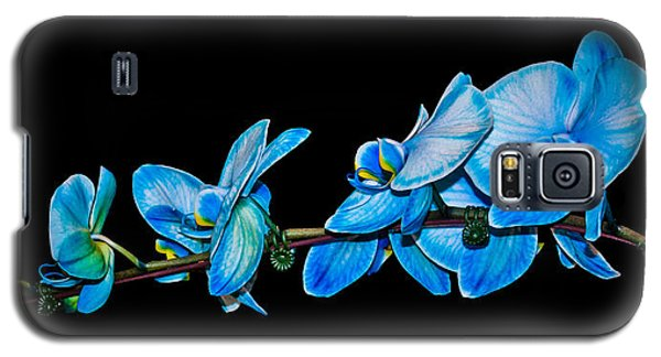 Blue Phalaenopsis Orchid Galaxy S5 Case