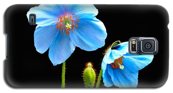 Galaxy S5 Case featuring the photograph Blue Poppy Flowers # 4 by Jeannie Rhode