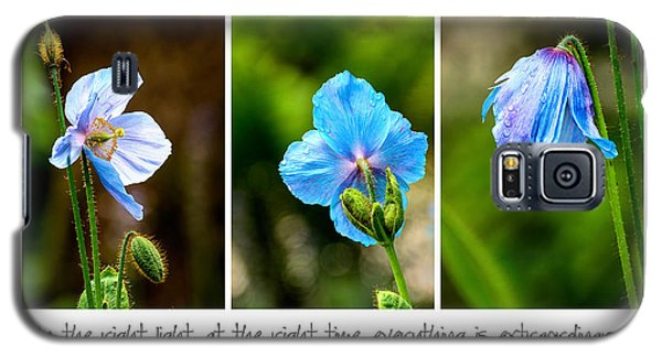 Blue Poppies Poster Galaxy S5 Case by Marion McCristall