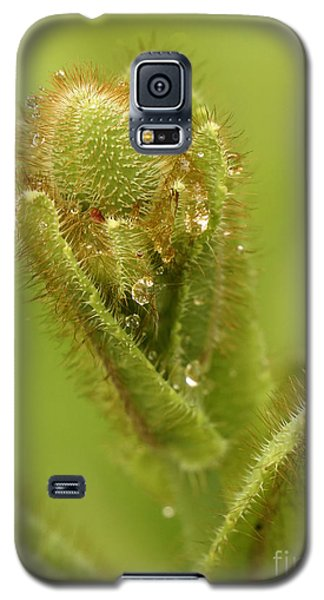 Galaxy S5 Case featuring the photograph Blue Poppy Bud by Inge Riis McDonald